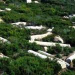 Antichi Romani Isola d'Elba